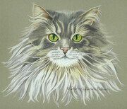 Maine Coon Cat  -  Sold
