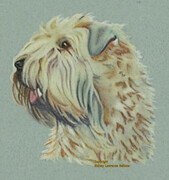 Finnegan  -  Sold