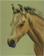 'Morgan Colt'  -  Sold