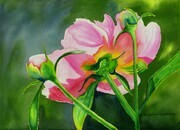 Peony Delight - Sold